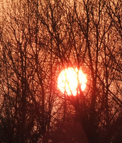 a photo of the setting sun behind trees